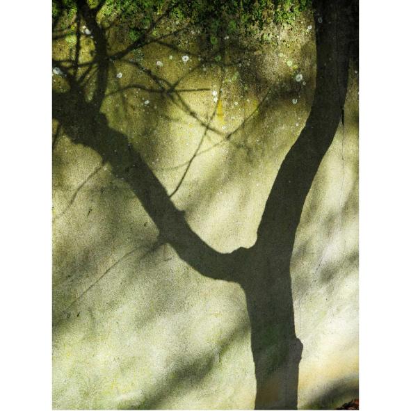 jardins-clos-16-dominique-clevenot