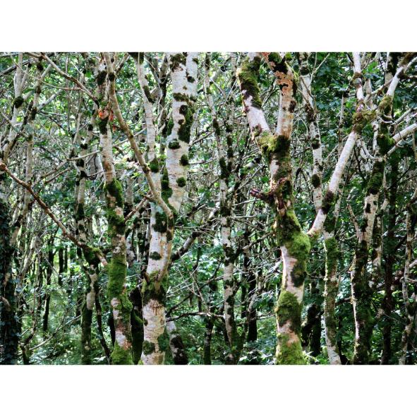 jardins-clos-30-dominique-clevenot