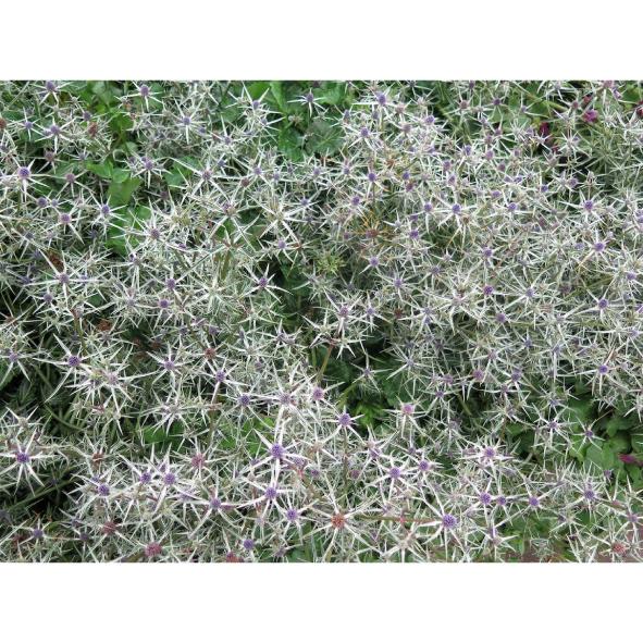 jardins-clos-31-dominique-clevenot