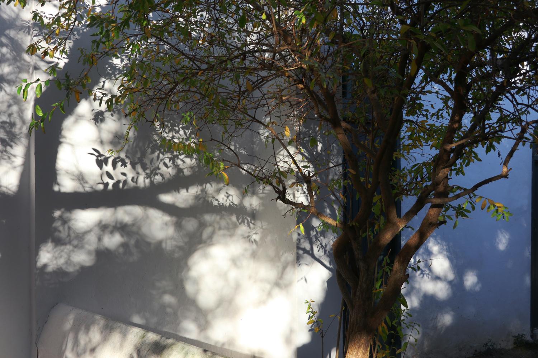 jardin-a-tanger-1-dominique-Clevenot