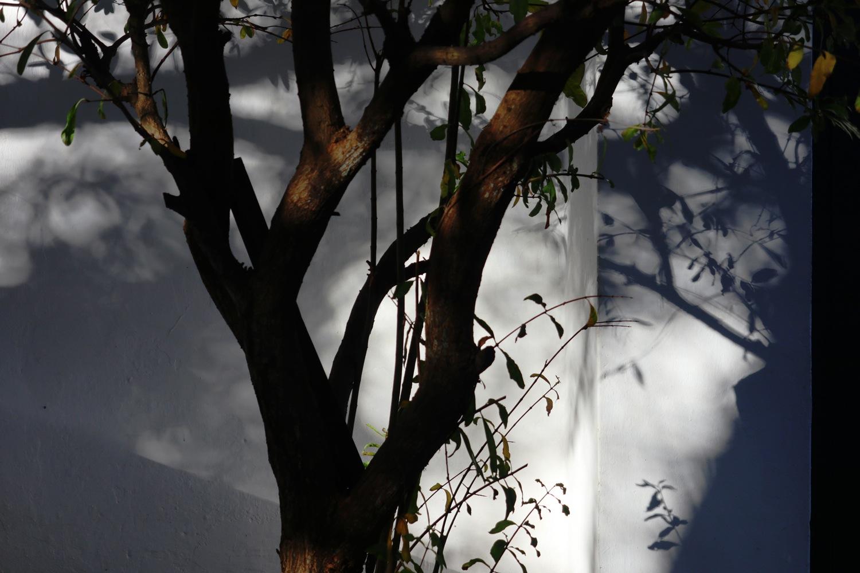 jardin-a-tanger-2-dominique-Clevenot.