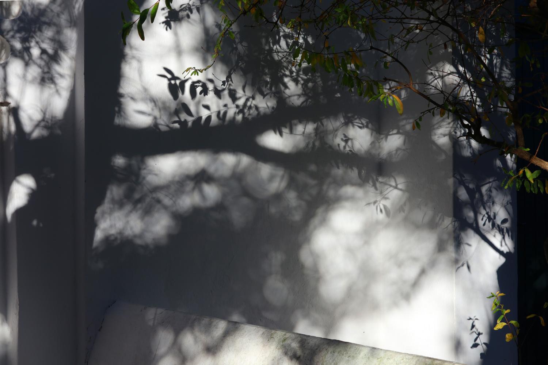 jardin-a-tanger-3-dominique-Clevenot.